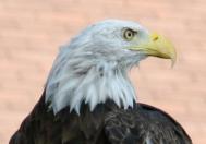 Birds of Prey- Kili Head