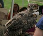 Birds of Prey- Owl 2